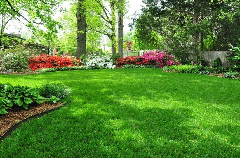 cropped-lush_lawn.jpg