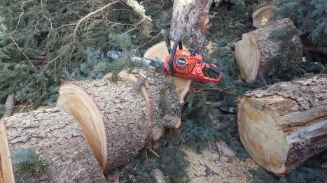 DTonroodchainsaw